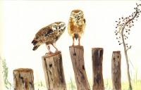 Owls on Stumps